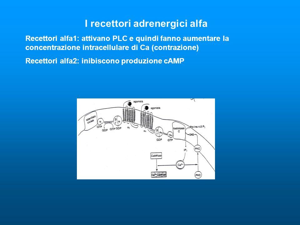 I recettori adrenergici alfa