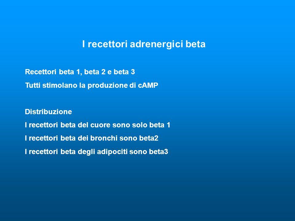 I recettori adrenergici beta