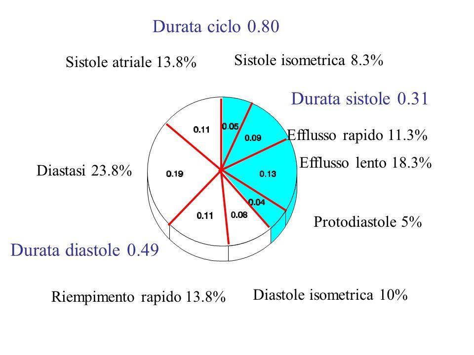 Durata ciclo 0.80 Durata sistole 0.31 Durata diastole 0.49