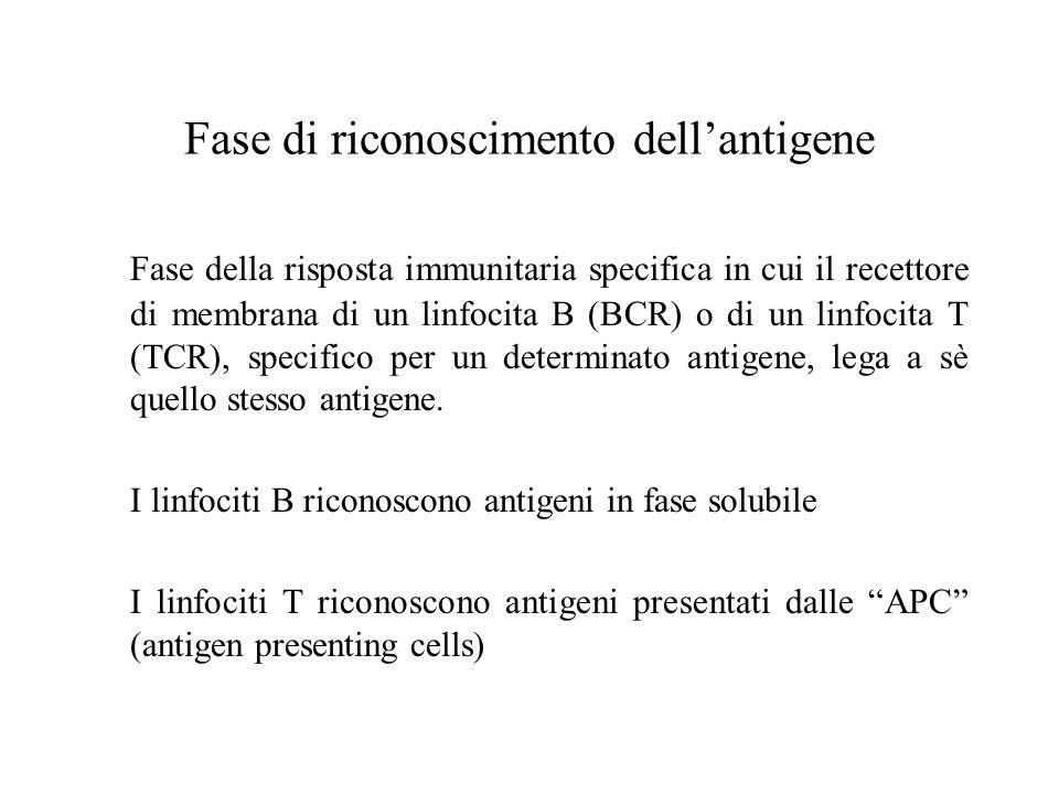 Fase di riconoscimento dell'antigene