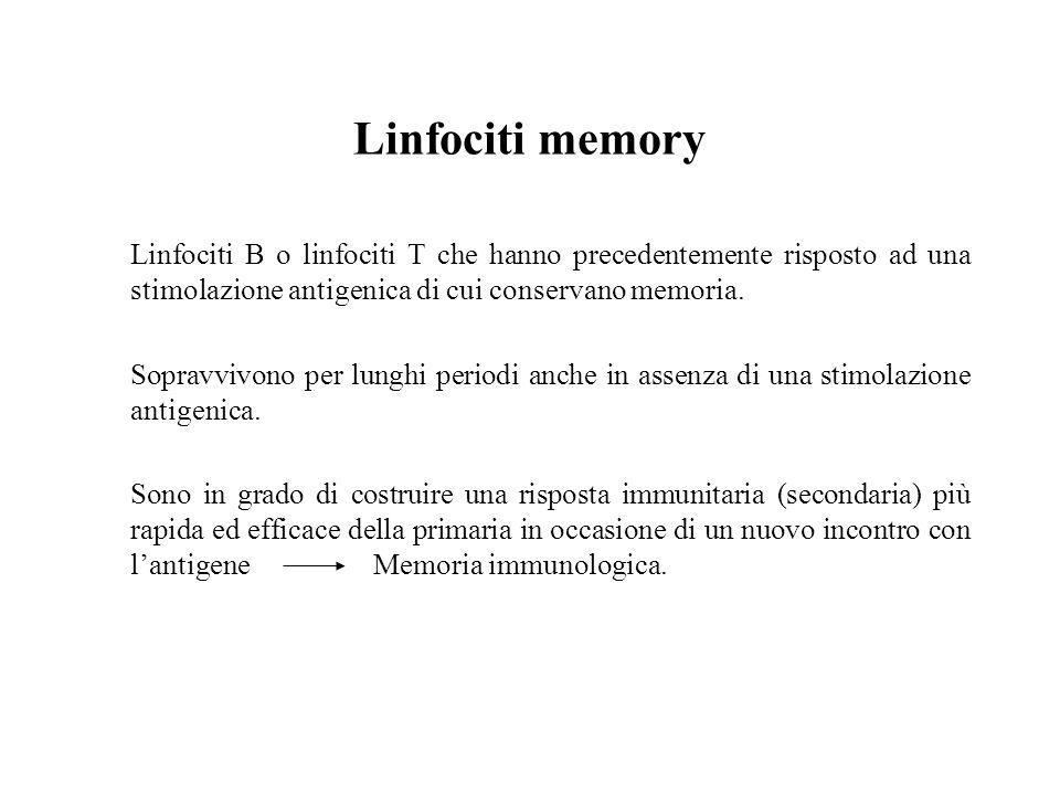 Linfociti memory Linfociti B o linfociti T che hanno precedentemente risposto ad una stimolazione antigenica di cui conservano memoria.