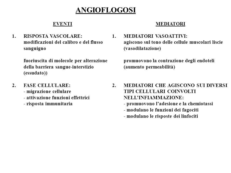 ANGIOFLOGOSI EVENTI. RISPOSTA VASCOLARE: modificazioni del calibro e del flusso sanguigno.