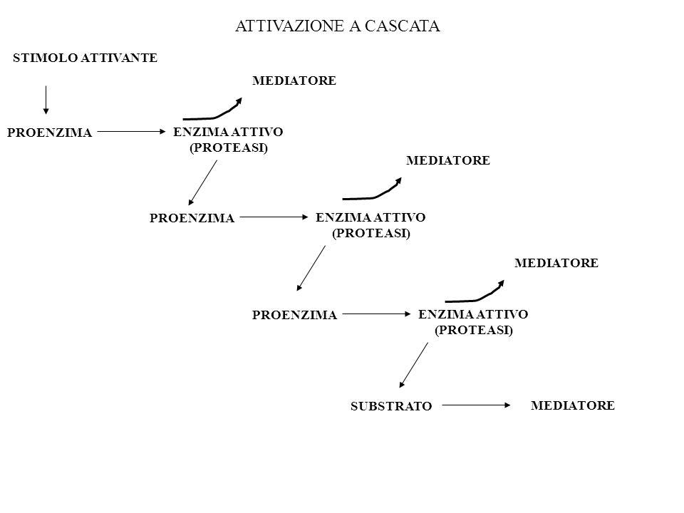 ATTIVAZIONE A CASCATA STIMOLO ATTIVANTE MEDIATORE PROENZIMA