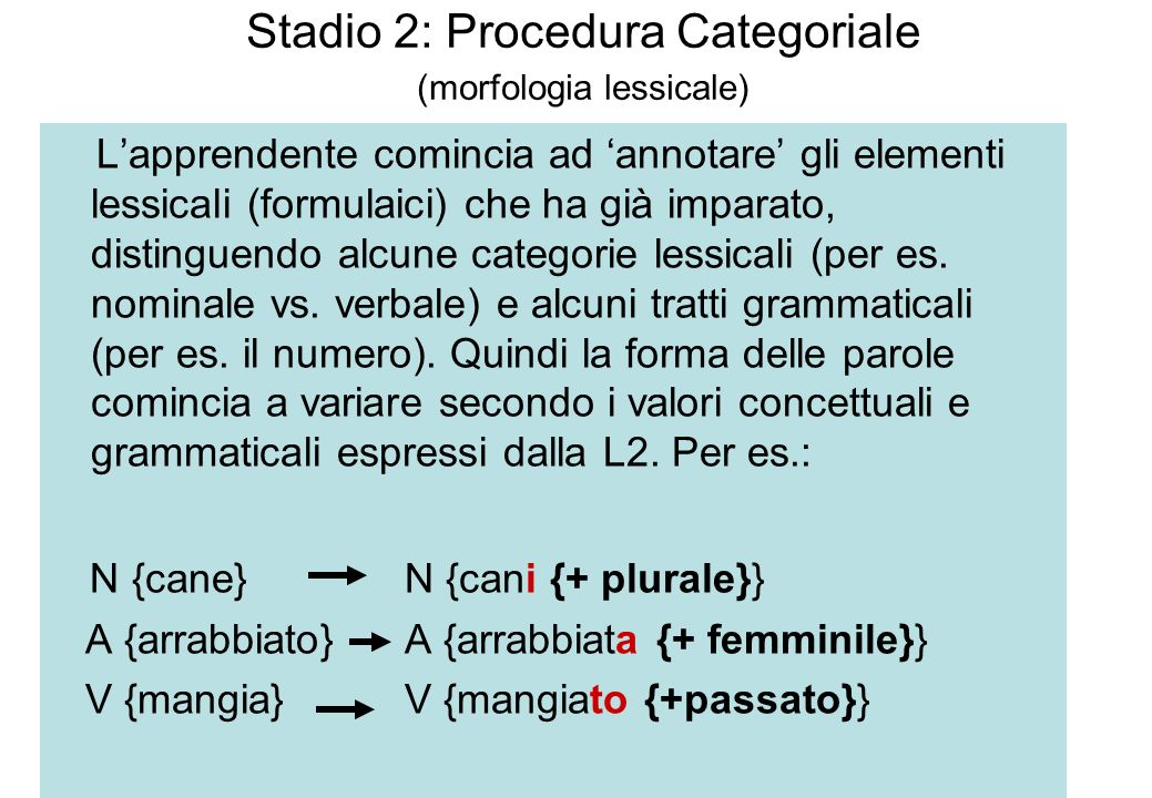 Stadio 2: Procedura Categoriale (morfologia lessicale)