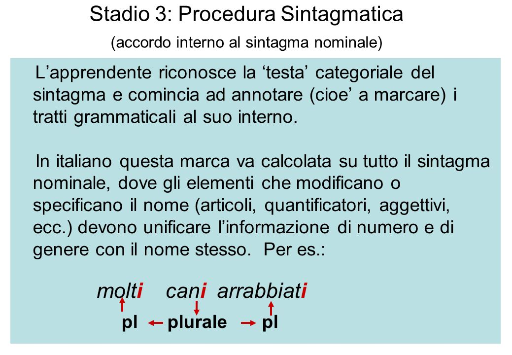Stadio 3: Procedura Sintagmatica (accordo interno al sintagma nominale)