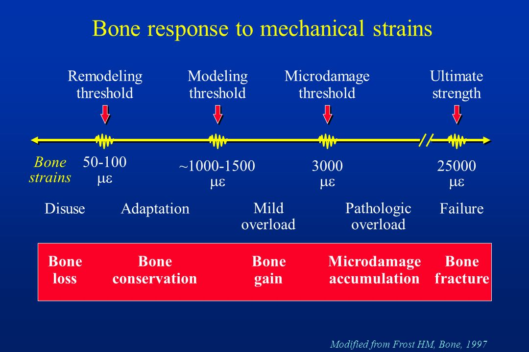 Bone response to mechanical strains