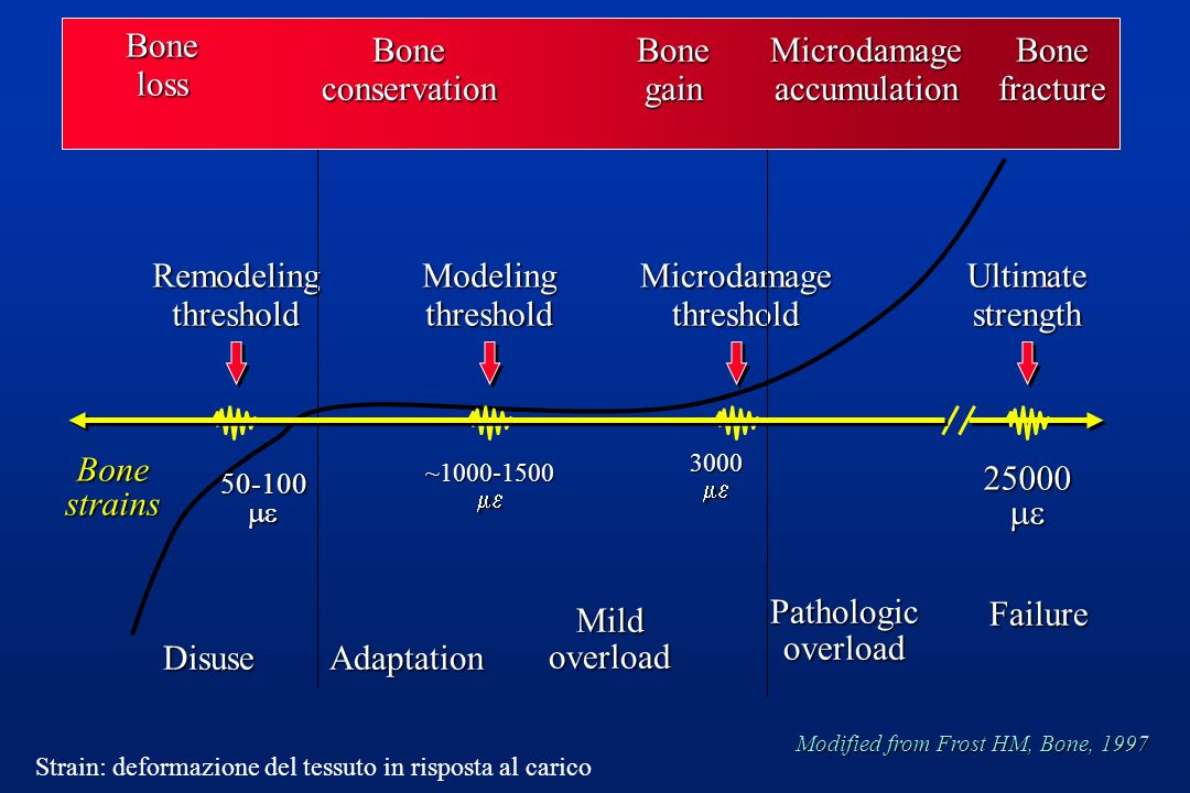 Bone loss Bone conservation Bone gain Microdamage accumulation Bone