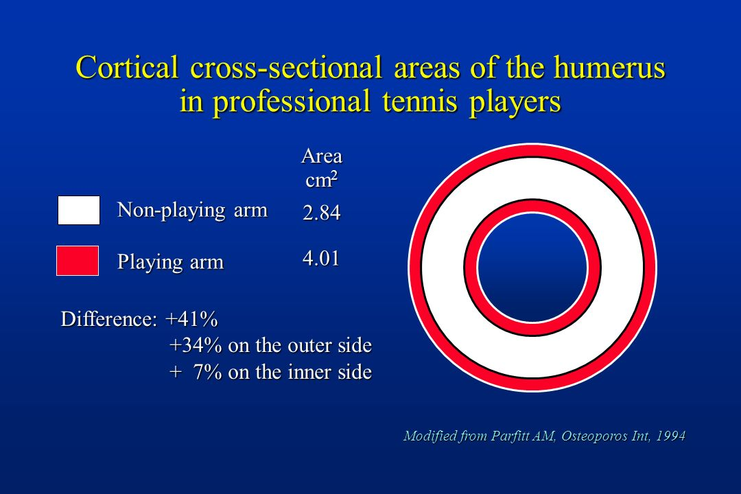 Cortical cross-sectional areas of the humerus in professional tennis players