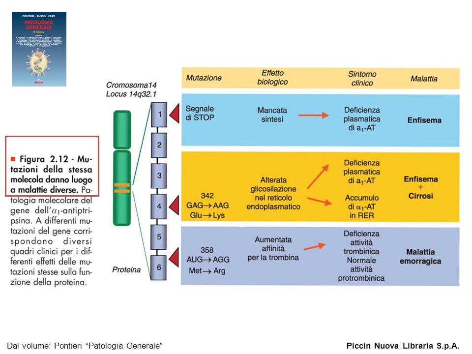 Figura 2.12 – Mutazioni della stessa molecola danno luogo a malattie diverse.