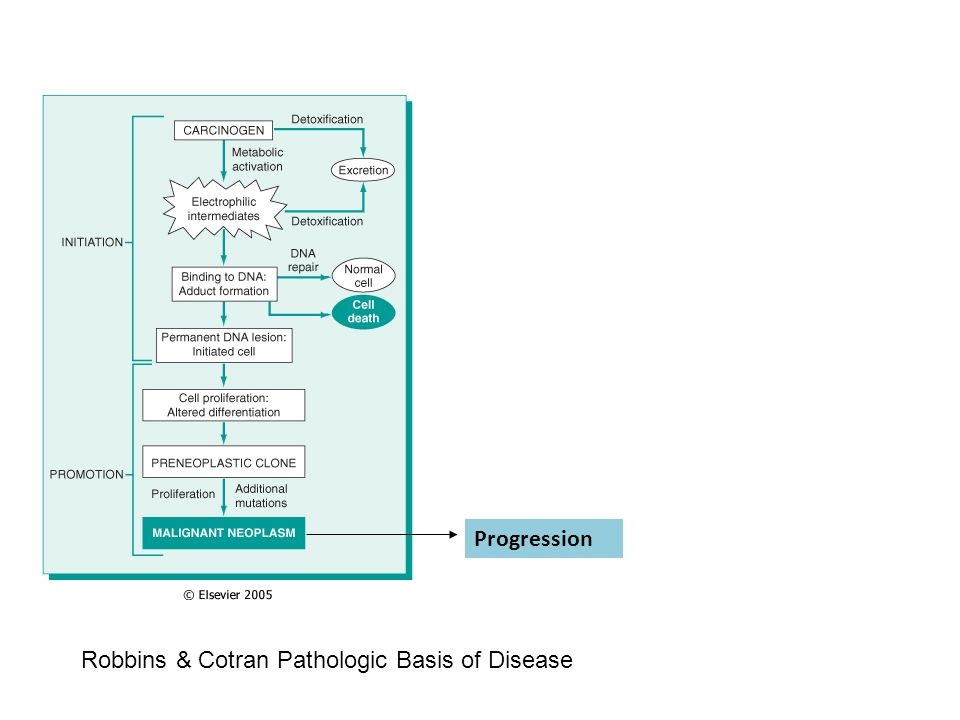 Progression Robbins & Cotran Pathologic Basis of Disease