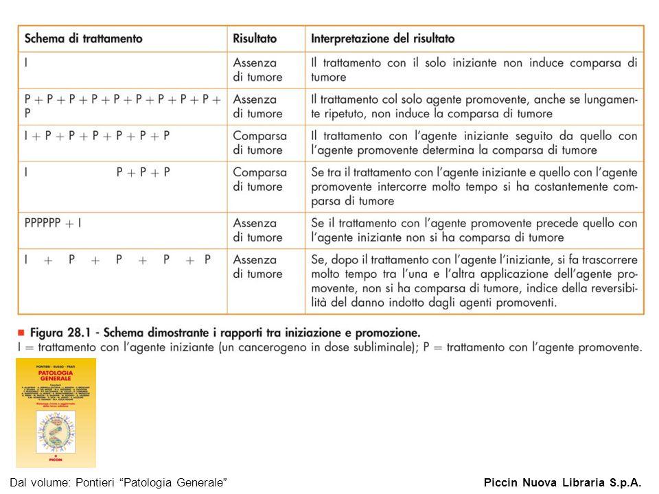Dal volume: Pontieri Patologia Generale Piccin Nuova Libraria S.p.A.