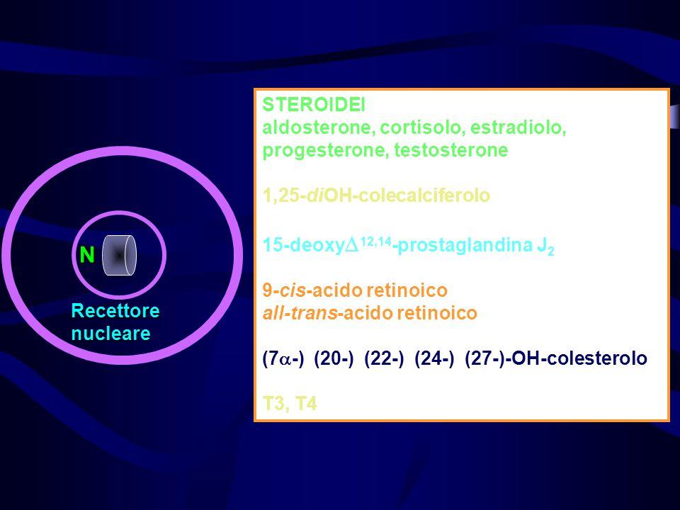 STEROIDEI aldosterone, cortisolo, estradiolo, progesterone, testosterone. 1,25-diOH-colecalciferolo.