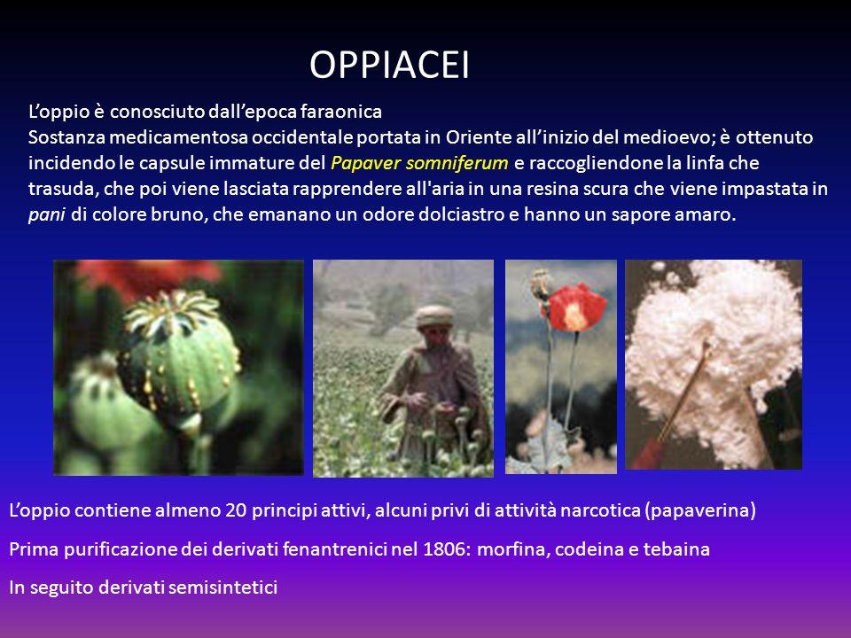 OPPIACEI L'oppio è conosciuto dall'epoca faraonica