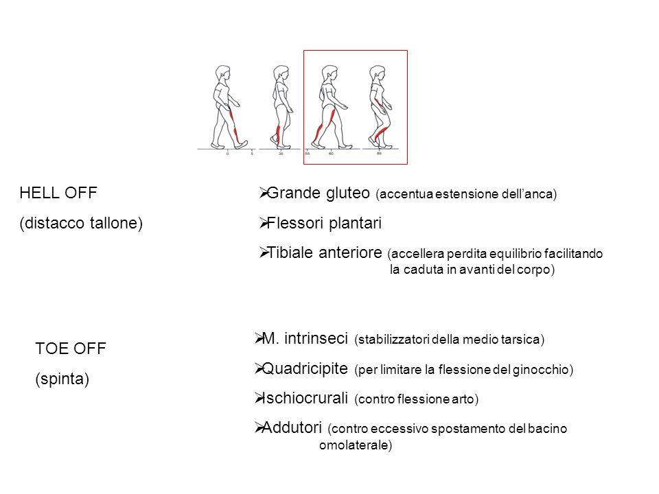 HELL OFF (distacco tallone) Grande gluteo (accentua estensione dell'anca) Flessori plantari.