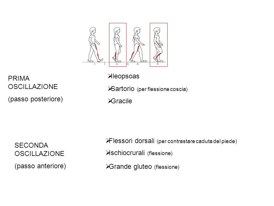 Ileopsoas Sartorio (per flessione coscia) Gracile. PRIMA OSCILLAZIONE. (passo posteriore) Flessori dorsali (per contrastare caduta del piede)