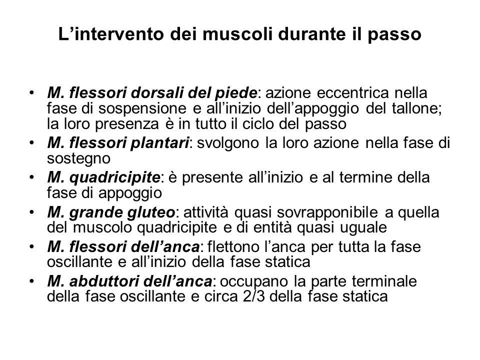 L'intervento dei muscoli durante il passo