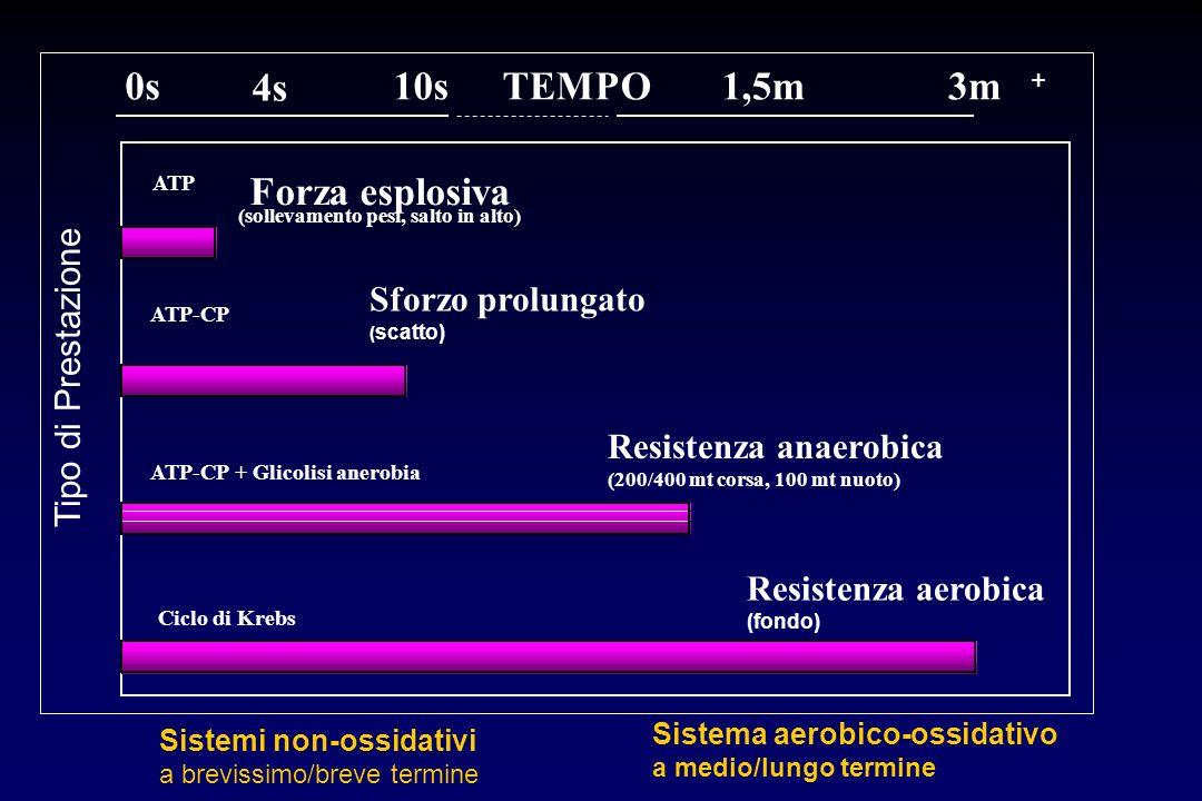 (sollevamento pesi, salto in alto) ATP-CP + Glicolisi anerobia