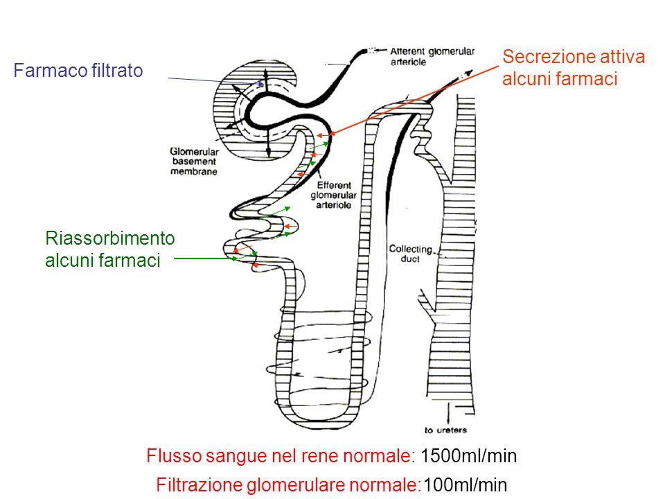 Flusso sangue nel rene normale: 1500ml/min