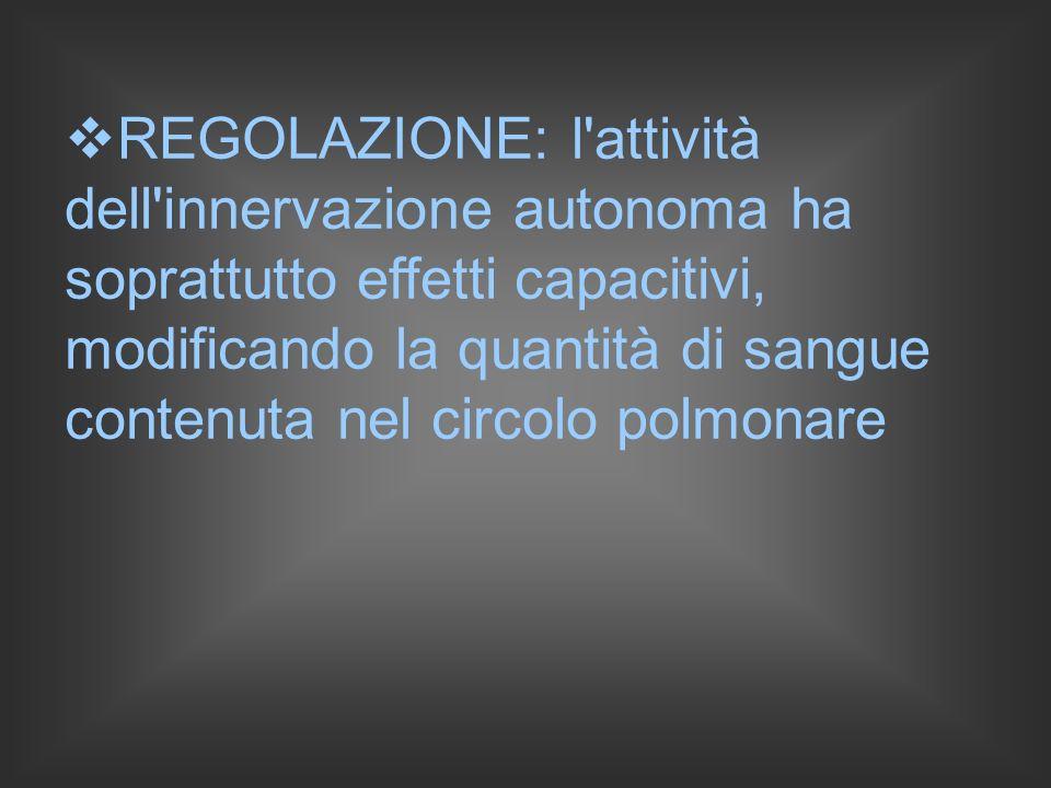 REGOLAZIONE: l attività dell innervazione autonoma ha soprattutto effetti capacitivi, modificando la quantità di sangue contenuta nel circolo polmonare