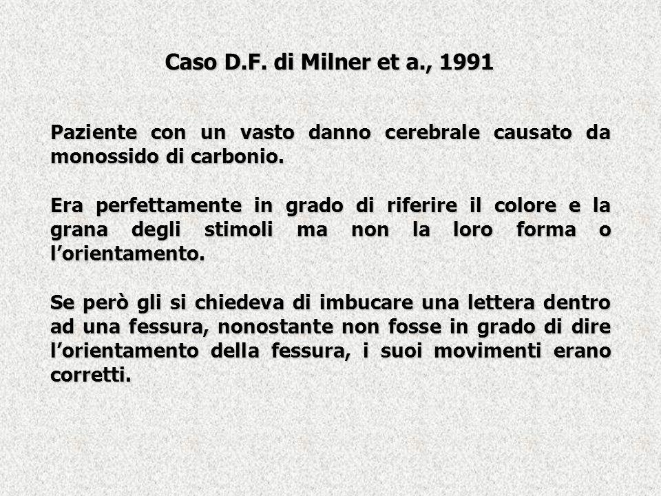 Caso D.F. di Milner et a., 1991 Paziente con un vasto danno cerebrale causato da monossido di carbonio.