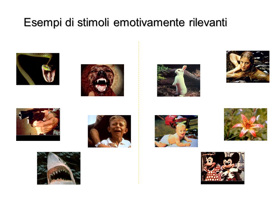 Esempi di stimoli emotivamente rilevanti