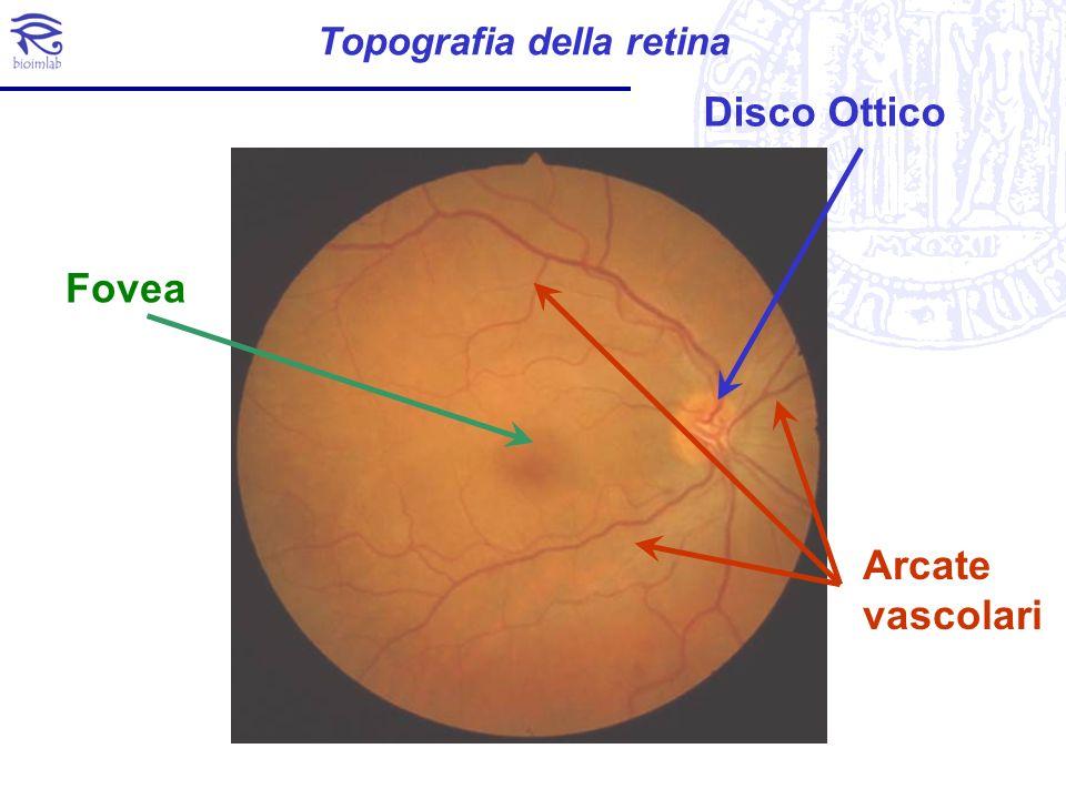 Topografia della retina