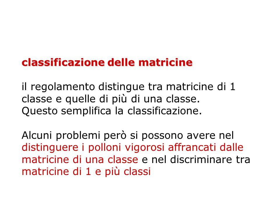 classificazione delle matricine il regolamento distingue tra matricine di 1 classe e quelle di più di una classe.