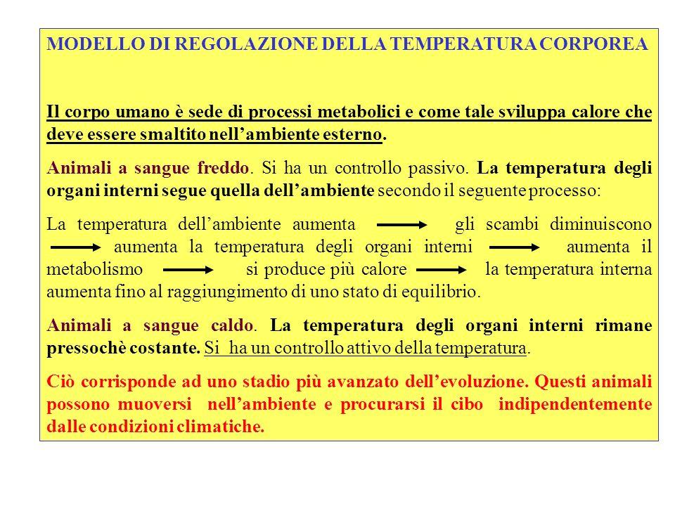 MODELLO DI REGOLAZIONE DELLA TEMPERATURA CORPOREA