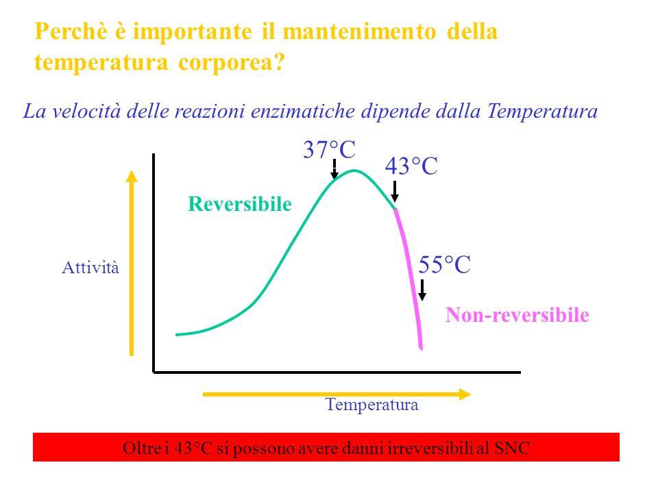 Oltre i 43°C si possono avere danni irreversibili al SNC