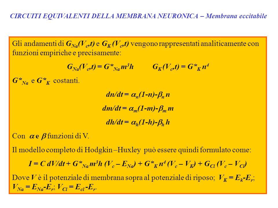 GNa(Vc,t) = G*Na m3h GK (Vc,t) = G*K n4 G*Na e G*K costanti.