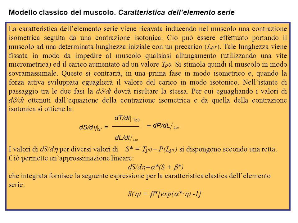 Modello classico del muscolo. Caratteristica dell'elemento serie