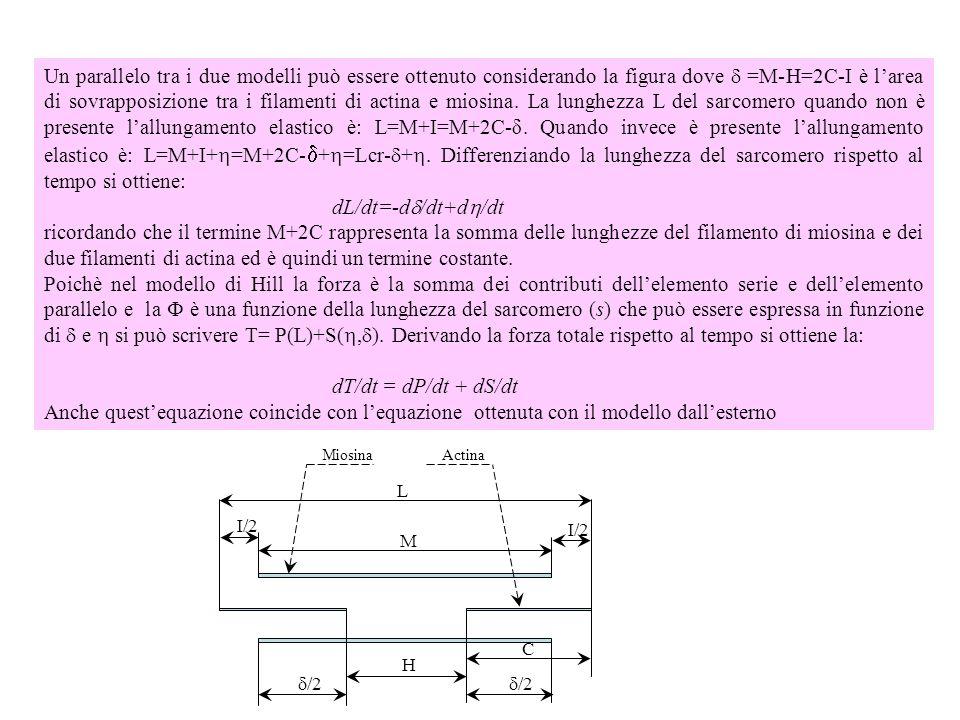 Un parallelo tra i due modelli può essere ottenuto considerando la figura dove d =M-H=2C-I è l'area di sovrapposizione tra i filamenti di actina e miosina. La lunghezza L del sarcomero quando non è presente l'allungamento elastico è: L=M+I=M+2C-δ. Quando invece è presente l'allungamento elastico è: L=M+I+=M+2C-d+=Lcr-d+. Differenziando la lunghezza del sarcomero rispetto al tempo si ottiene: