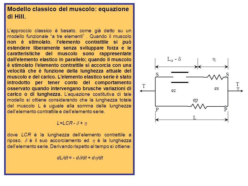 Modello classico del muscolo: equazione di Hill.