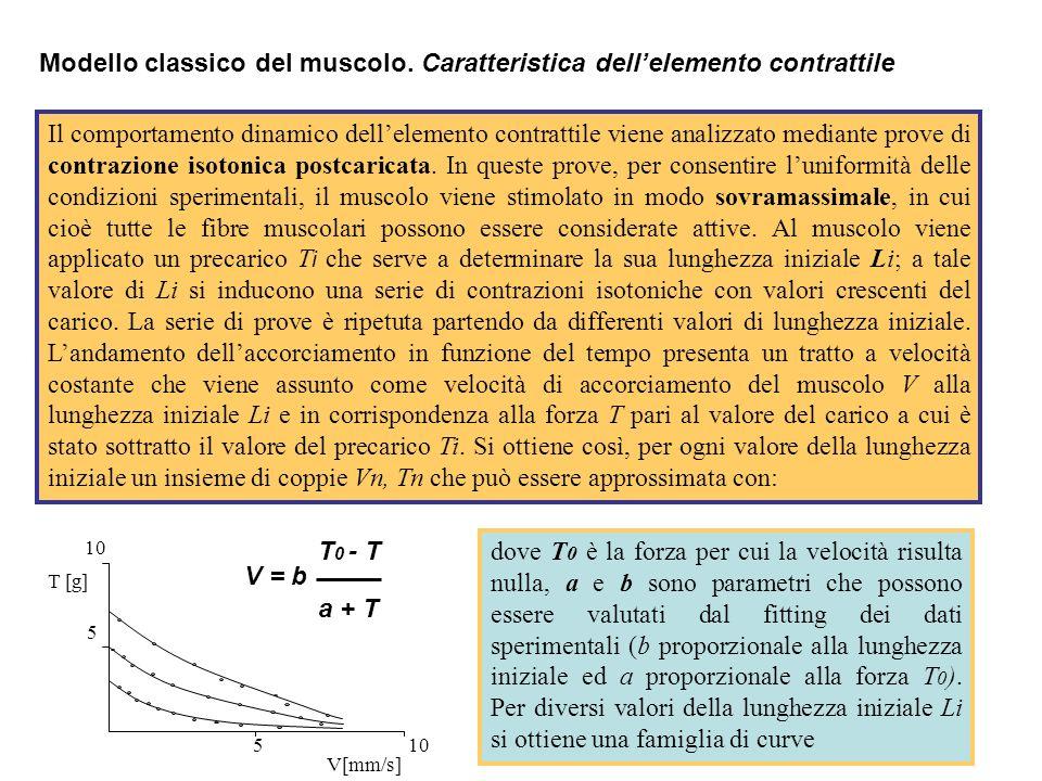 Modello classico del muscolo. Caratteristica dell'elemento contrattile