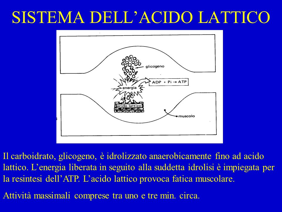 SISTEMA DELL'ACIDO LATTICO