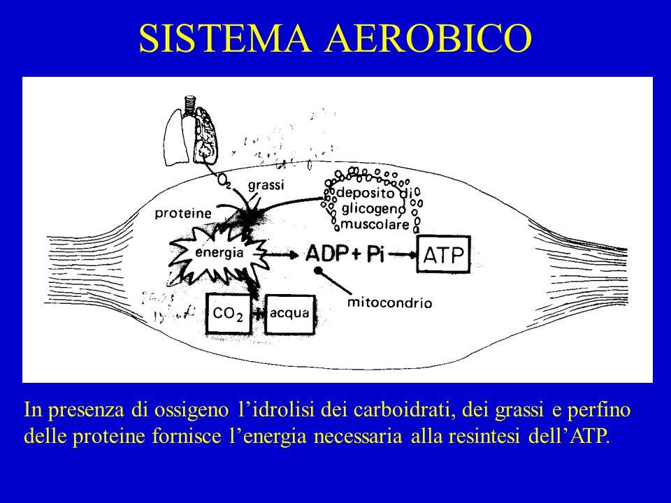 SISTEMA AEROBICO