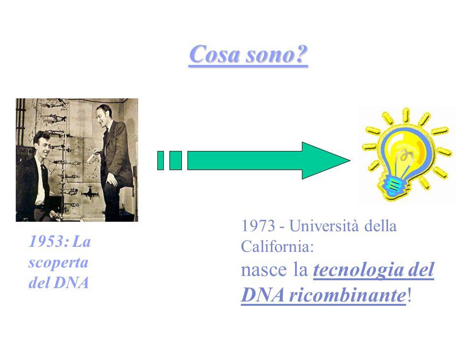 Cosa sono. 1953: La scoperta. del DNA.