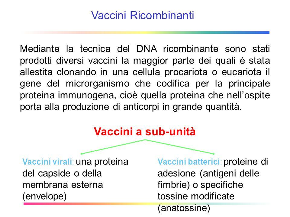 Vaccini Ricombinanti Vaccini a sub-unità