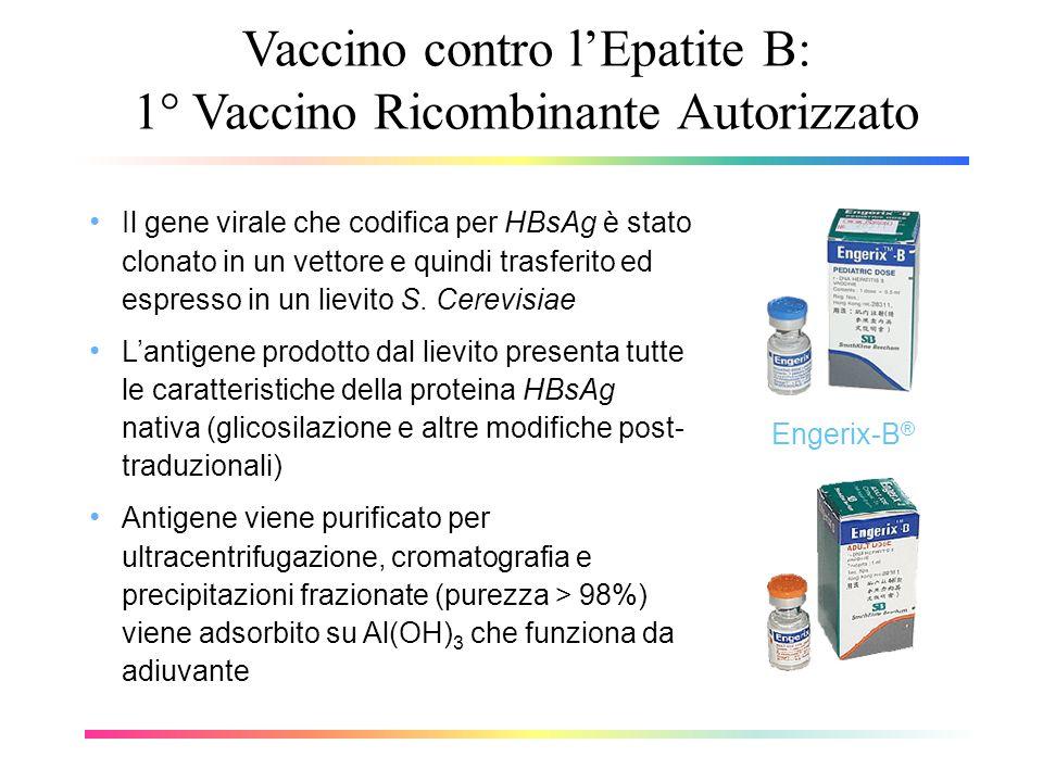 Vaccino contro l'Epatite B: 1° Vaccino Ricombinante Autorizzato