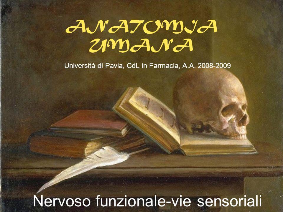 Nervoso funzionale-vie sensoriali