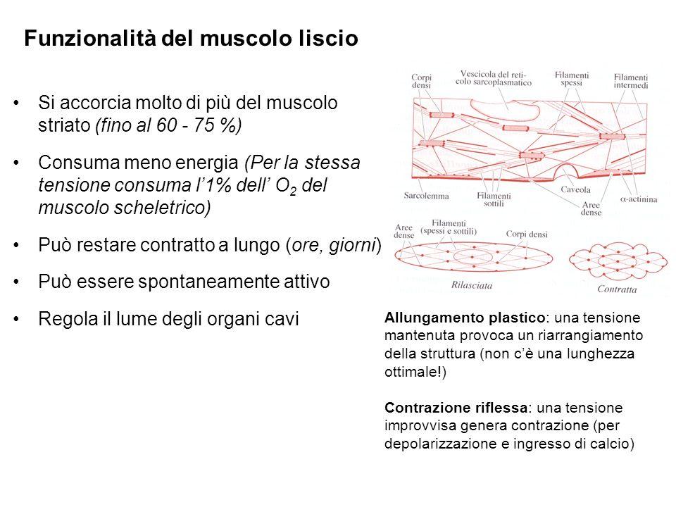 Funzionalità del muscolo liscio