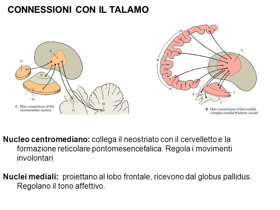 CONNESSIONI CON IL TALAMO