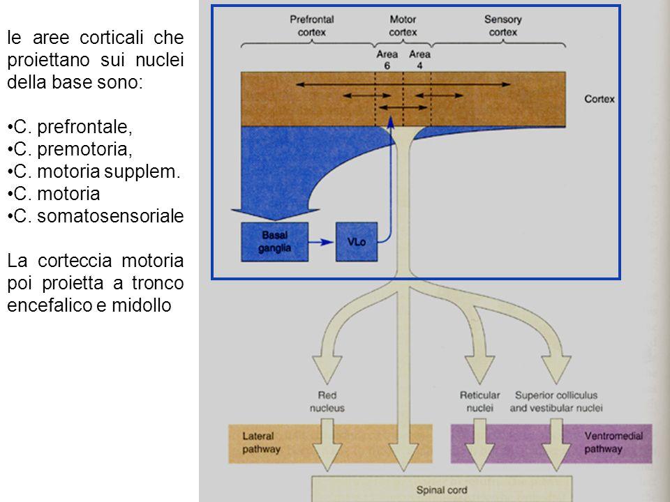 le aree corticali che proiettano sui nuclei della base sono:
