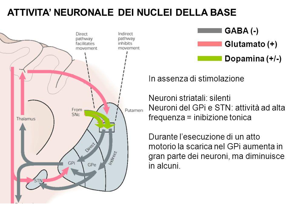 ATTIVITA' NEURONALE DEI NUCLEI DELLA BASE