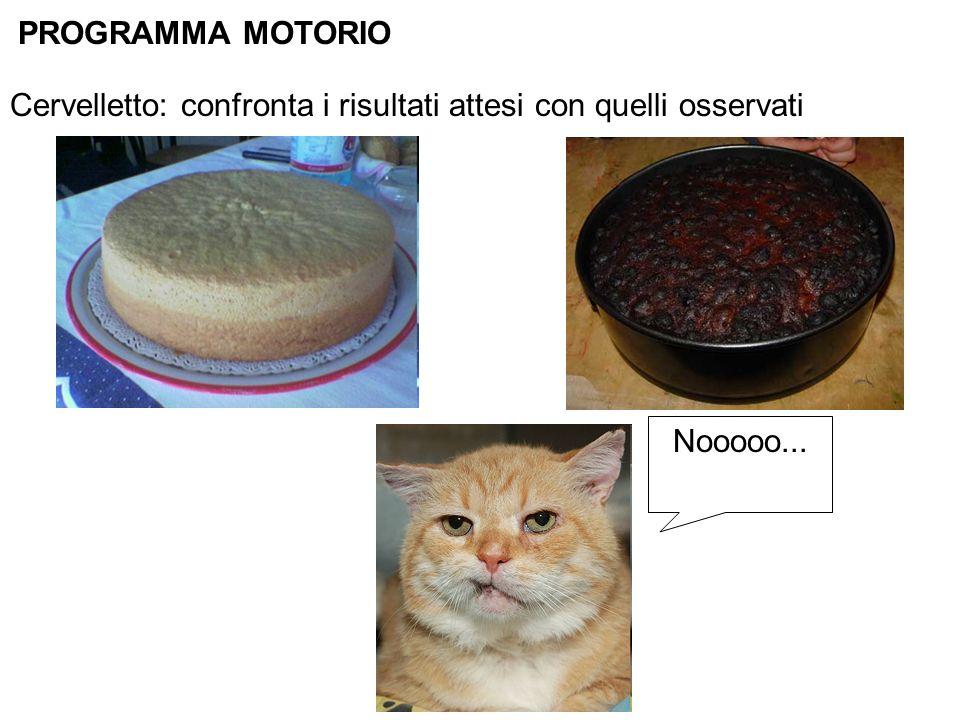 PROGRAMMA MOTORIO Cervelletto: confronta i risultati attesi con quelli osservati Nooooo...
