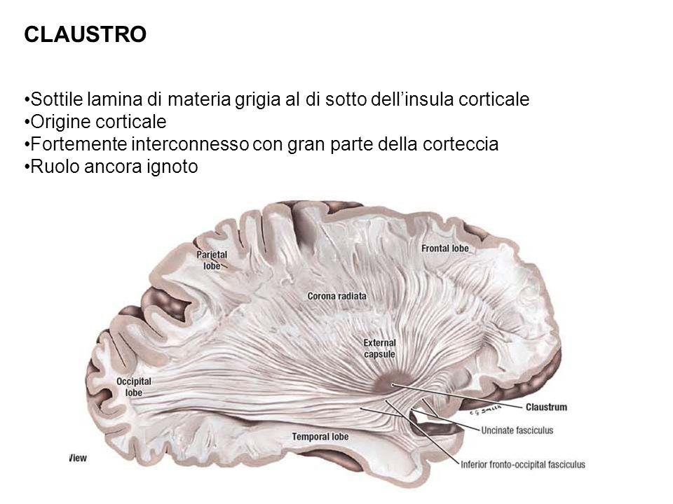 CLAUSTRO Sottile lamina di materia grigia al di sotto dell'insula corticale. Origine corticale.