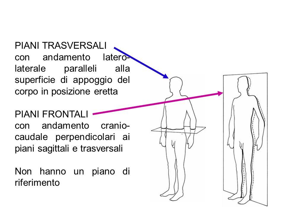 PIANI TRASVERSALIcon andamento latero-laterale paralleli alla superficie di appoggio del corpo in posizione eretta.