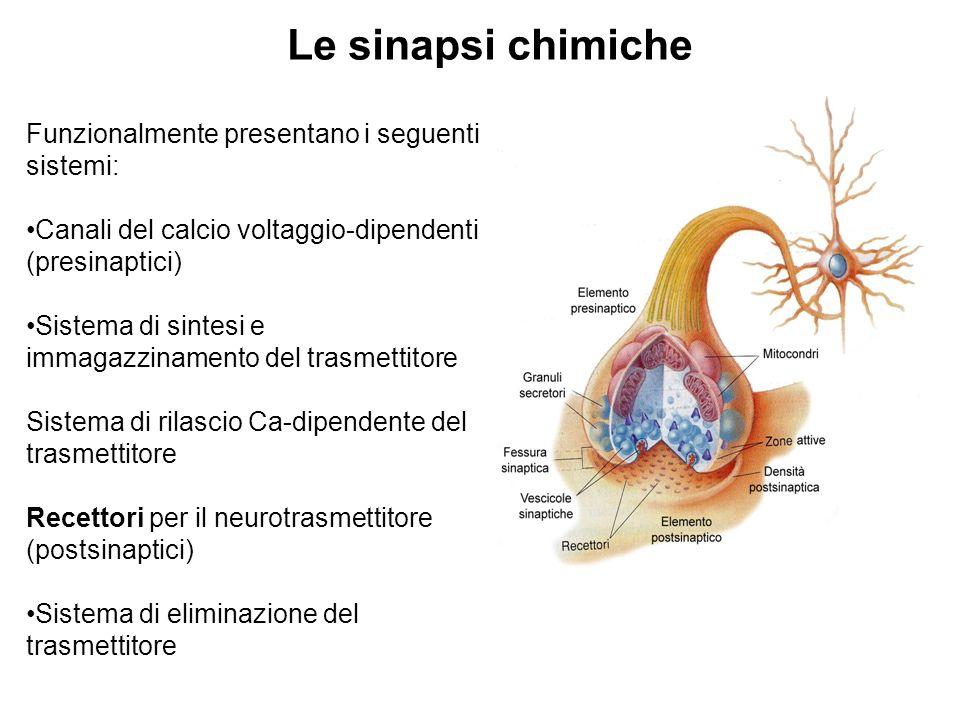 Le sinapsi chimiche Funzionalmente presentano i seguenti sistemi: