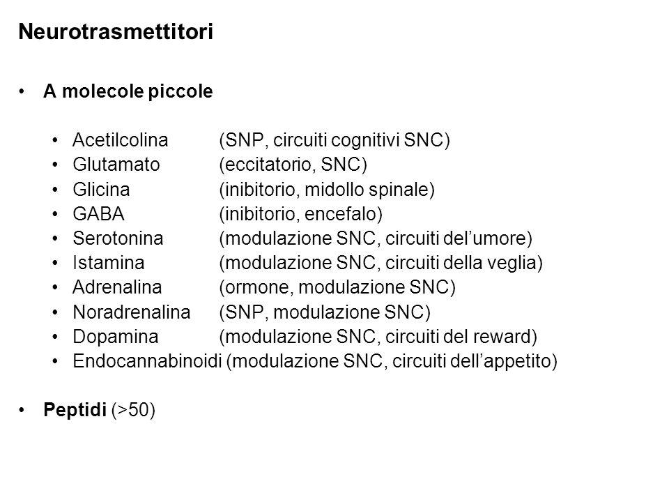 Neurotrasmettitori A molecole piccole