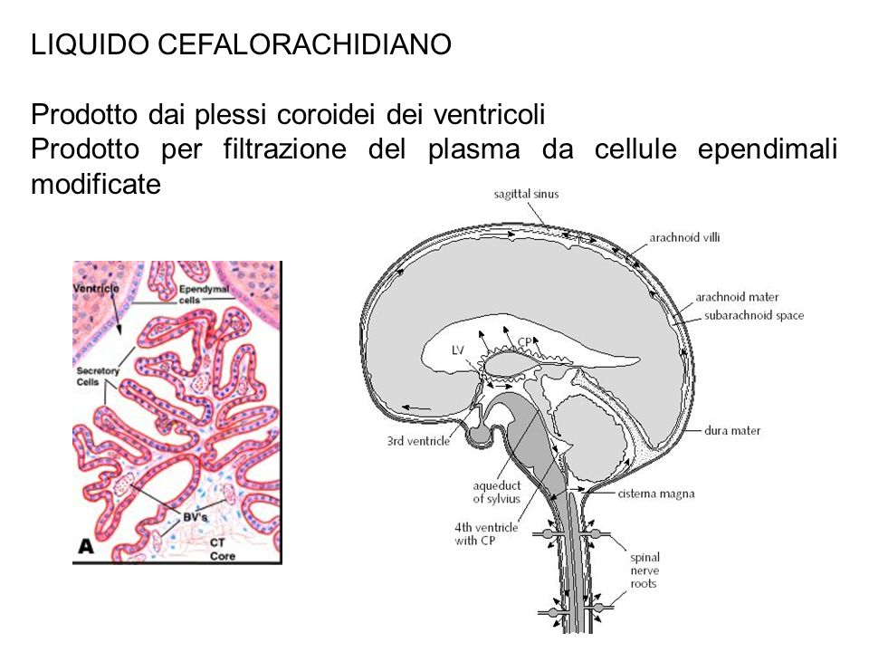 LIQUIDO CEFALORACHIDIANO